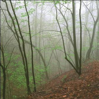 VEM 2014 Wooded Ravine In Fog(1) compressed
